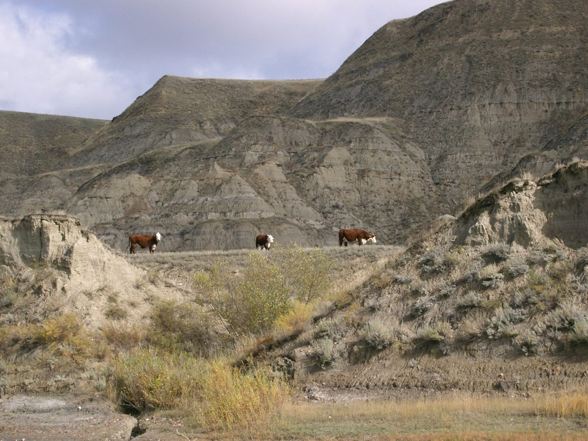 2006 photo gallery - canoe trip to Drumheller, AB